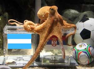 Octopus-predicts-world-cup-2014