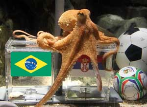 psychic-octopus-predicts-world-cup-winners.w654
