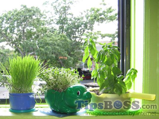 Used home Plastic items make tree pot
